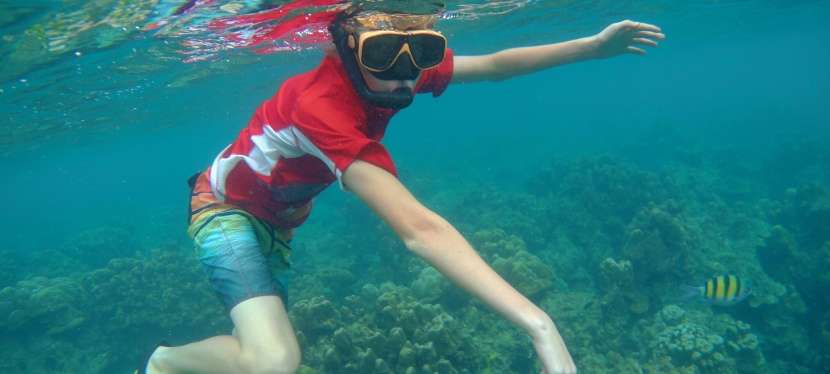 Snorkeling with Dolphins &Turtles